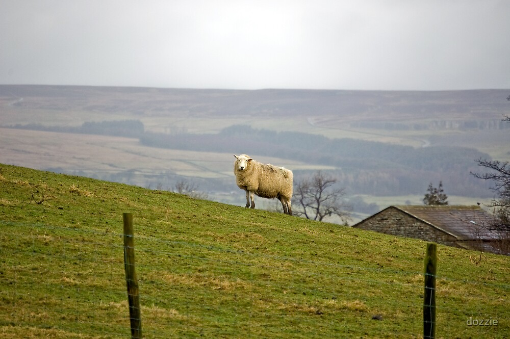 Sheep on the brow by dozzie