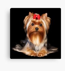 Yorkie with bow Canvas Print