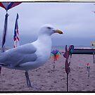 Seagull  by valizi