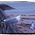 Seagull  and butterfly by valizi