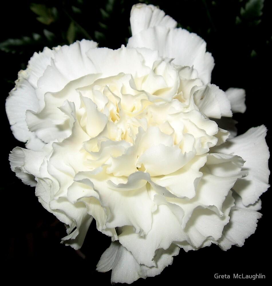 White by Greta  McLaughlin