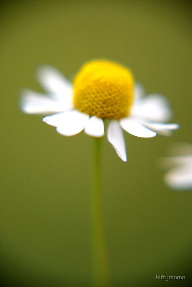 Lonely Daisy by kittymomo