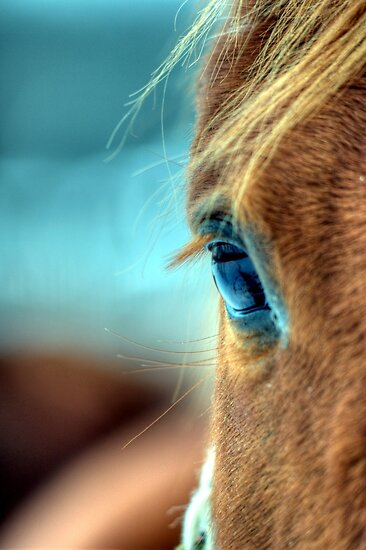Horse Eye by Kim McClain Gregal