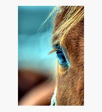 Horse Eye Photographic Print