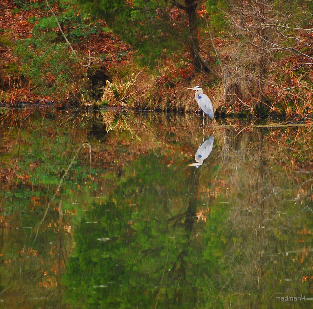 Serene Reflections by madman4
