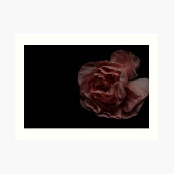 Pink Carnation  Art Print