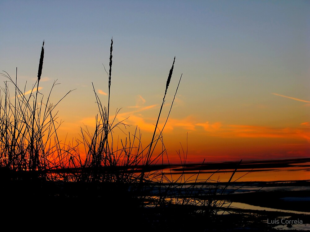 A Grassy Sunset by Luis Correia