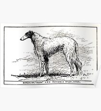 All about dogs a book for doggy people Charles Henry Lane 1900 0137 Borzoi Oh Poster