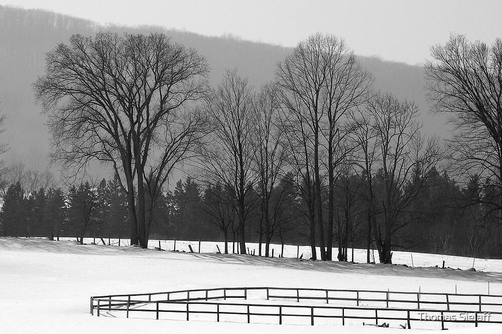 Warm Winter Haze by Thomas Sielaff