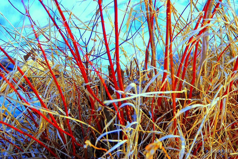 Red Reeds by buddykfa
