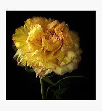 Peony Flower Photographic Print