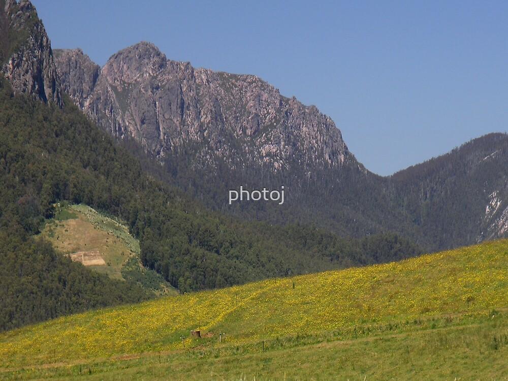 photoj Tas Mt Roland, In a field of Yellow wild flowers by photoj