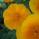 les fleurs by AAndersen