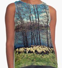 sheeps Contrast Tank