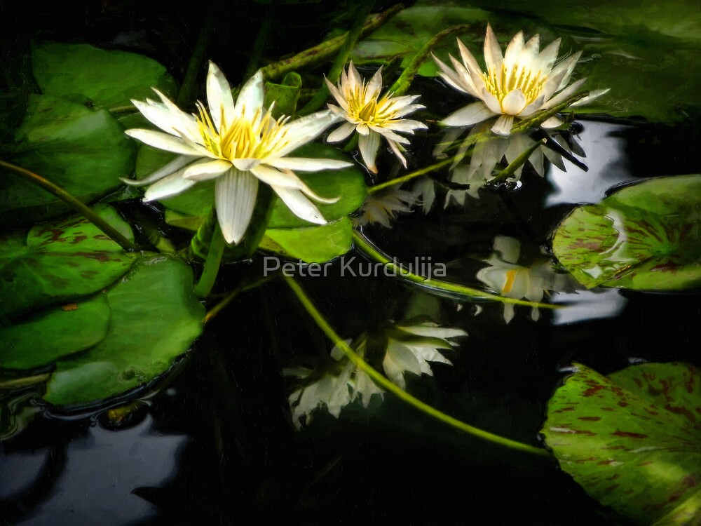 Searching For Monet's Water Lilies by Peter Kurdulija