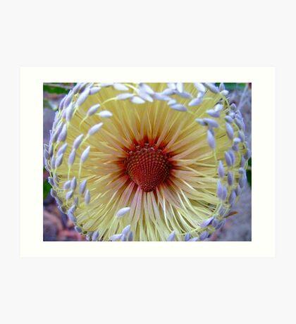 BottleBrush Flower.... Art Print