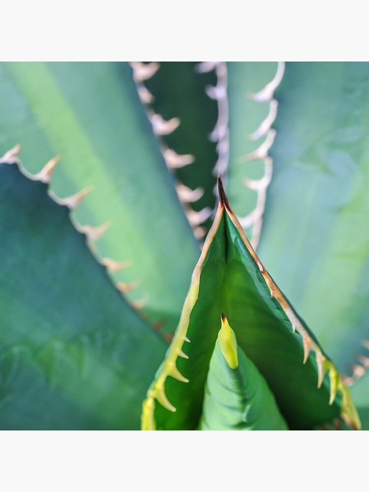 Euphorbia Euphorie von alanshapiro