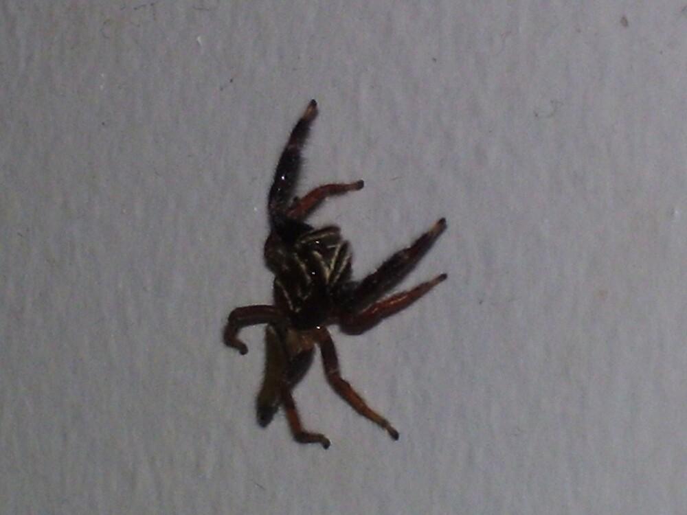 Spider... by xXDarkAngelXx