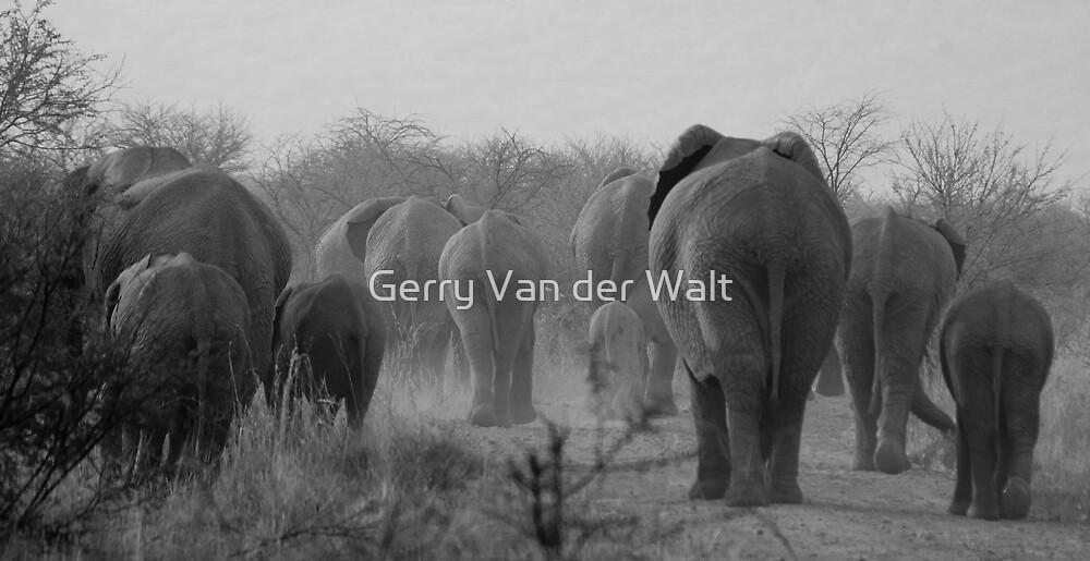 Walking Away by Gerry Van der Walt
