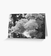 Black and White Wild Flower Tree Greeting Card
