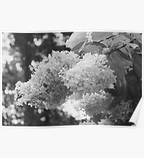 Black and White Wild Flower Tree Poster