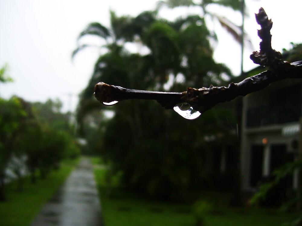 Water Branch by xXDarkAngelXx