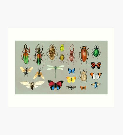 The Usual Suspects - Insects on grey Art Print