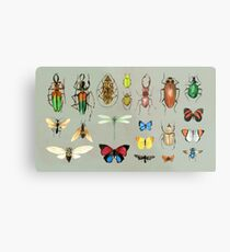 The Usual Suspects - Insects on grey - watercolour bugs pattern by Cecca Designs Metal Print