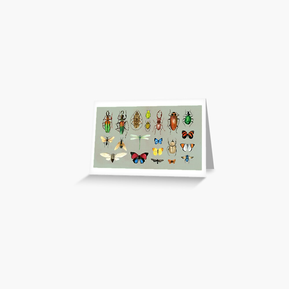 The Usual Suspects - Insects on grey - watercolour bugs pattern by Cecca Designs Greeting Card