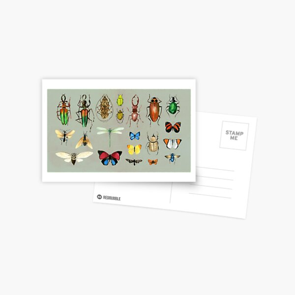 The Usual Suspects - Insects on grey - watercolour bugs pattern by Cecca Designs Postcard