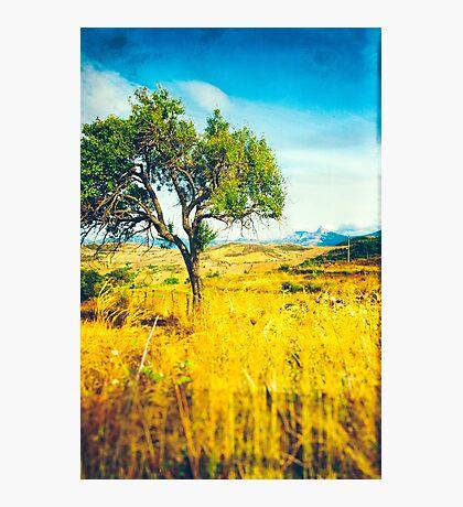 Sicilian Landscape With Tree Photographic Print