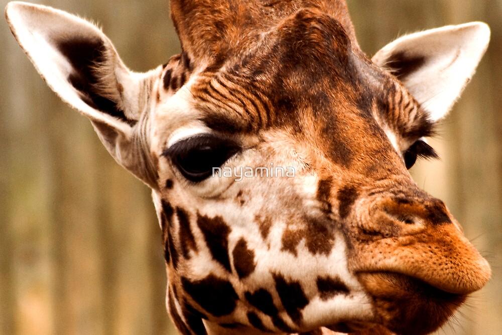 Giraffe head by nayamina