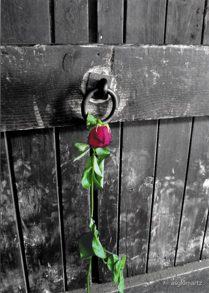 Rose by asylumartz