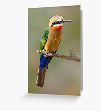 Whitefronted Bee-eater, Botswana Greeting Card