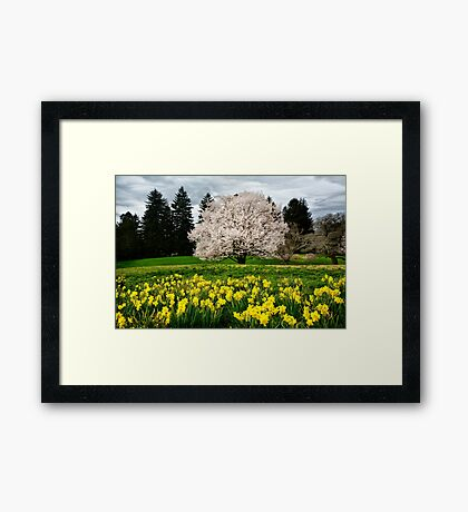 The Colors of Spring Framed Print