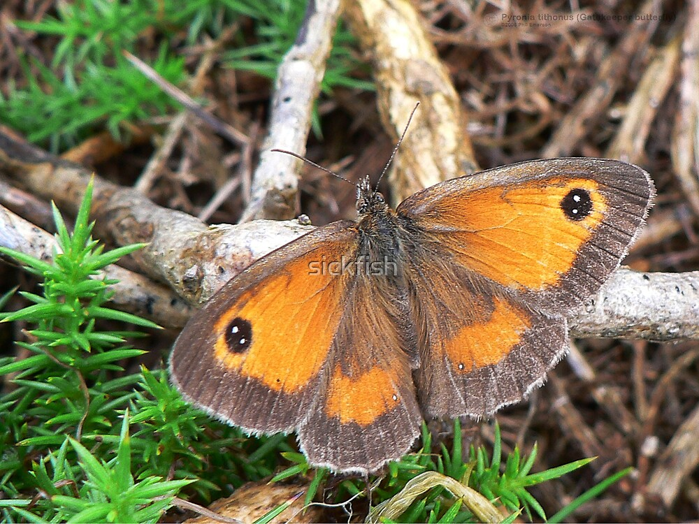 Gatekeeper at rest by Phil Emerson
