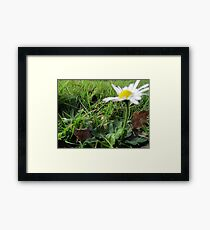 Little Daisy Framed Print