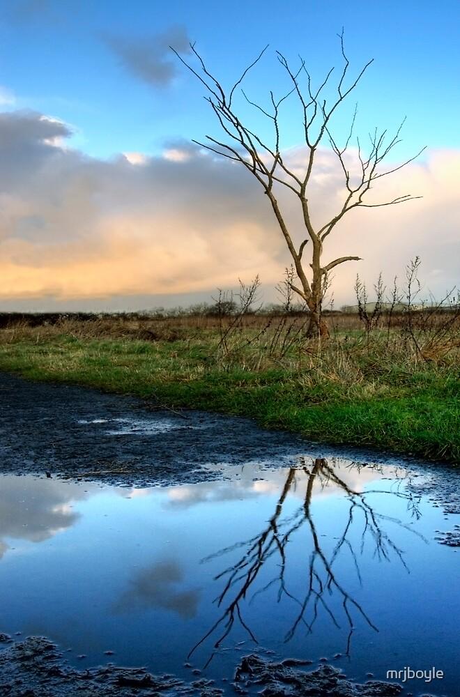 Reflection by mrjboyle