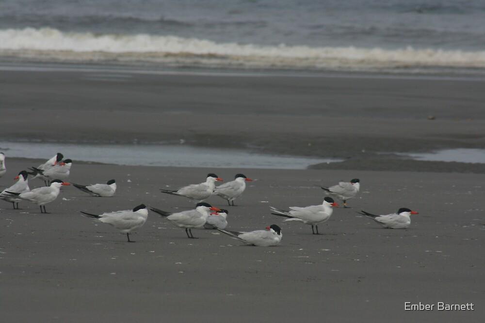 beach birds by Ember Barnett