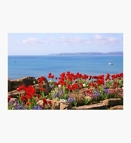 Tulips on the East Cliff, Bournemouth Photographic Print