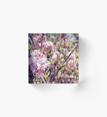 Counting Cheerful Cherry Blossoms Acrylic Block
