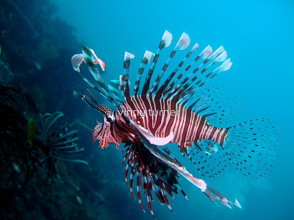 Lionfish by vinny turner