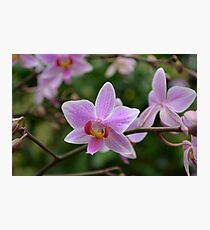 Beautiful Orchids Photographic Print