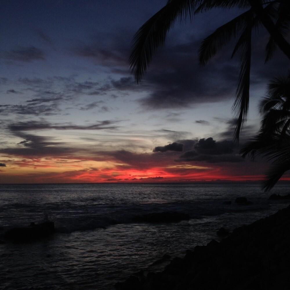 Palm Tree Sunset by Adam Kearney