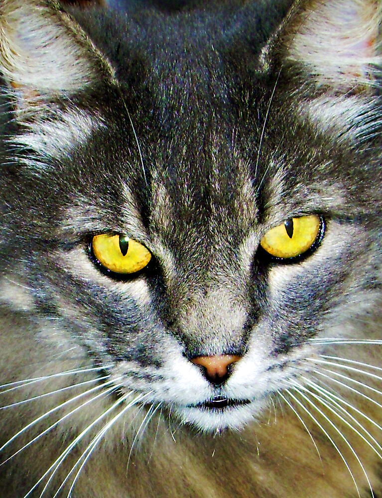 Yellow Cat Eyes by Swede