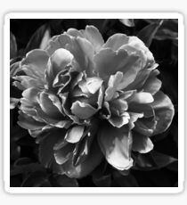 Vintage Peony Bloom II Sticker