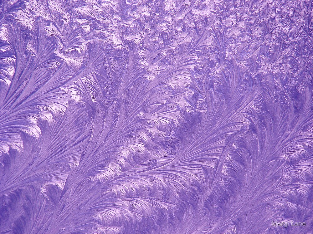 Purple Feathers by Mary  Lane