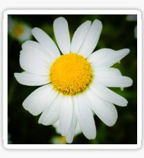 Daisy Power II Sticker
