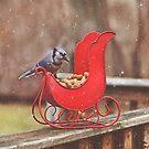Winter Blue Jay #3 by Pat Abbott