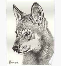 Young Pup - Timber Wolf Poster